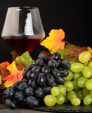 Two kinds of grapes: green and red with autumn yellow leaves and royalty free stock photography