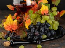 Two kinds of grapes: green and red with autumn yellow leaves and stock photos