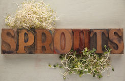Two kinds of sprouts Stock Photos