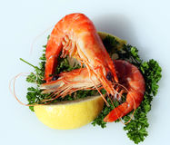 Two king Australian prawns Stock Photos