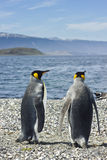 Two king pinguins near sea Stock Photography