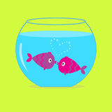 Two kissing fishes in the aquarium. Card. Stock Photography