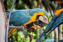 Two kissing parrots at Nong Nooch garden park, Thailand.  stock photos