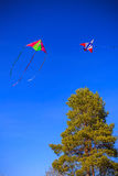 Two kite in the blue sky. Two colorful kite in the blue sky above the tree Stock Image