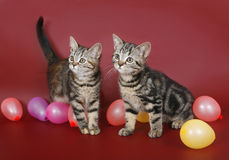 Two kitten with balloons Stock Photo