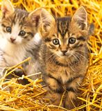 Two kitten, close-up Stock Images