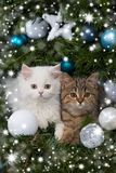 Two kitten lying in a christmas tree Royalty Free Stock Image