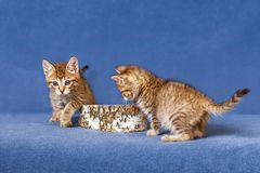 Two kitten Stock Images