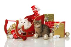Two kitten in a santa sledge with decoration Stock Images