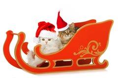 Two kitten in a santa sledge  on white Stock Images