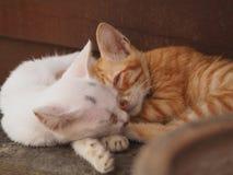 Two Kitten Royalty Free Stock Photos