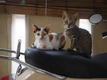 Two kitten. On top of scooter Stock Photography