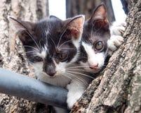 Two Kitten on tree Stock Photos