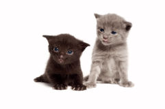 Two  Kittens. Kittens on a white background Royalty Free Stock Photos