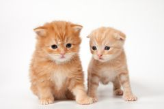 Two kittens Royalty Free Stock Photos
