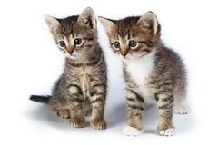Two kittens. Royalty Free Stock Images