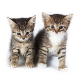 Two kittens. Stock Images