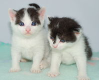 Two Kittens Stock Photo