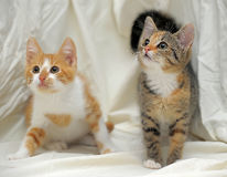 Free Two Kittens Stock Images - 42675024