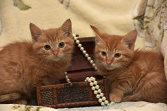 Two kittens Royalty Free Stock Images