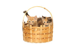 Two kittens in basket Royalty Free Stock Photo