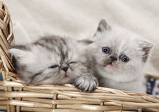 Two kittens in basket Royalty Free Stock Photos