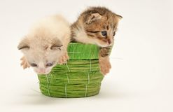 Two kittens on a basket Royalty Free Stock Photo