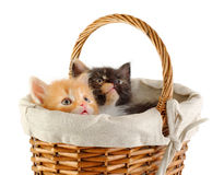 Two kittens in basket Stock Images