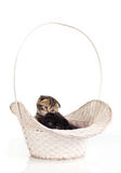 Two kittens in the basket Stock Photography