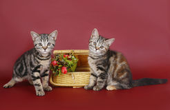 Two kittens with a basket of flowers. stock images