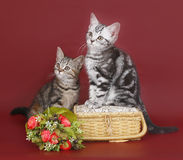 Two kittens with a basket of flowers. royalty free stock images