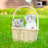 Two kittens in basket on green grass Royalty Free Stock Photography
