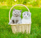 Two kittens in basket on green grass Royalty Free Stock Images