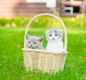 Two kittens in basket on green grass Royalty Free Stock Image