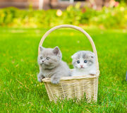 Two kittens in basket on green grass Royalty Free Stock Photos