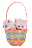 Two kittens in basket Royalty Free Stock Photography