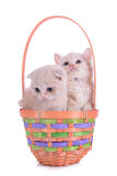 Two kittens in basket Stock Photo