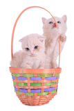 Two kittens in basket Stock Image