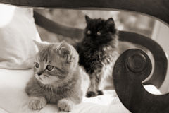Two kittens on a chair Royalty Free Stock Photography