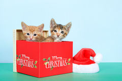 Two kittens in a christmas box. Orange tabby and calico tortie tabby kittens in a red Christmas box next to small santa hat on green table with light blue Stock Photo