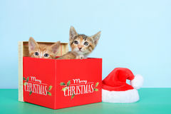Two kittens in a christmas box. Orange tabby and calico tortie tabby kittens in a red Christmas box next to small santa hat on green table with light blue Stock Image