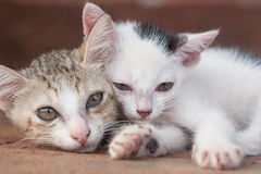 Two kittens close-up. Sleepy kittens with pink pads Stock Photo