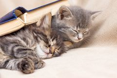 Two kittens covered with a book sleeping next . Rest after school_ royalty free stock images