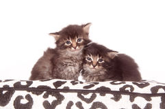 Two kittens on a cushion Stock Photo