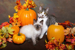 Two Kittens with Fall Leaves and Pumpkins Stock Photo