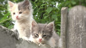 Two kittens on a fence outside,blurred stock video footage