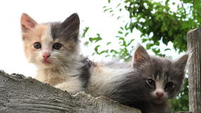 Two kittens on a fence outside stock video