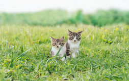 Two kittens friends Stock Images