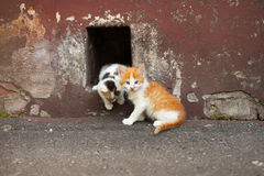 Two kittens is getting out through a hole in the painted concrete ragged wall stock photography