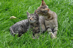 Two kittens on the grass stock image